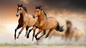 Image Result For Feng Shui Office Desk For Horse