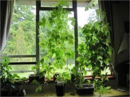 plants vastu